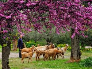 Fotoreis Griekenland