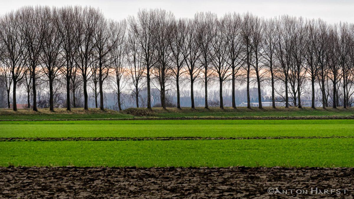 Winterlandschap Zeeuws-Vlaanderen