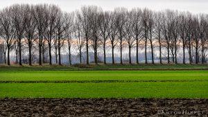 Fotoworkshop Winterlandschap Zeeuws-Vlaanderen @ Startpunt in/rond Kloosterzande, Zeeuws-Vlaanderen