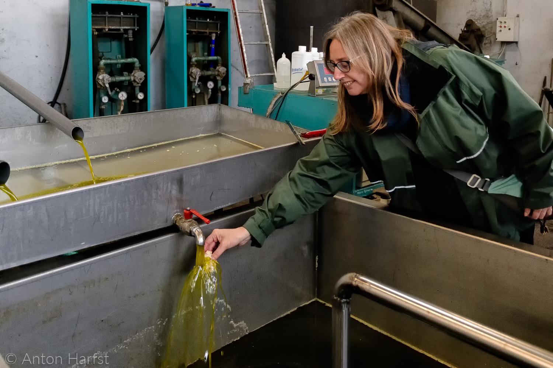 Verse olijfolie proeven