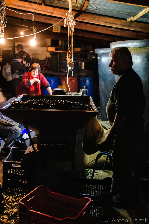 Reportagefotografie: het selecteren van de Kalamata-olijven